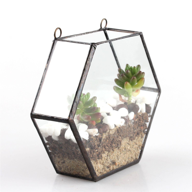 bonsai pentagon dodecahedron glass geometric terrarium box succulent plant flower pots geometric hexagon glass terrarium box wall planter hanging plant pots garden bonsai