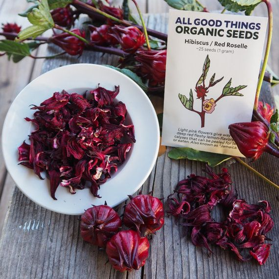 Organic 20 seeds per pack Hibiscus Seed Pack purple roselle hibiscus sabdarif