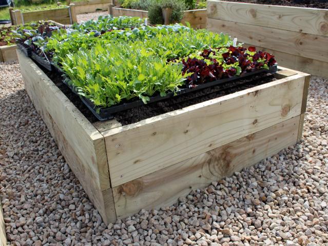 Premier 14inch High Raised Bed Kit Growing Vegetables At School