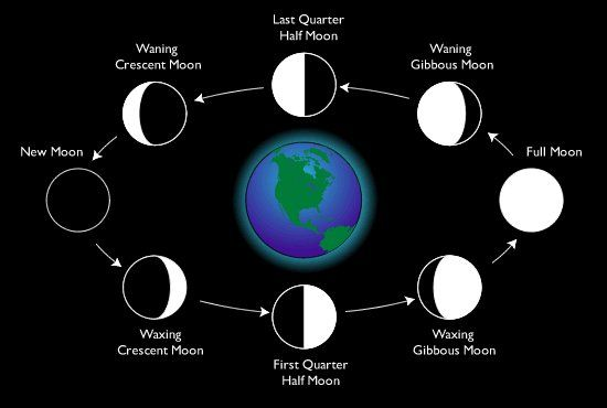 Phases Of The Moon Earth Sun And Moon Moon Facts Moon Phases
