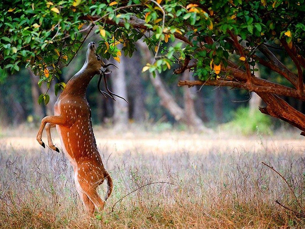 نتيجة بحث الصور عن صور غزلان Wildlife travel, Deer wallpaper