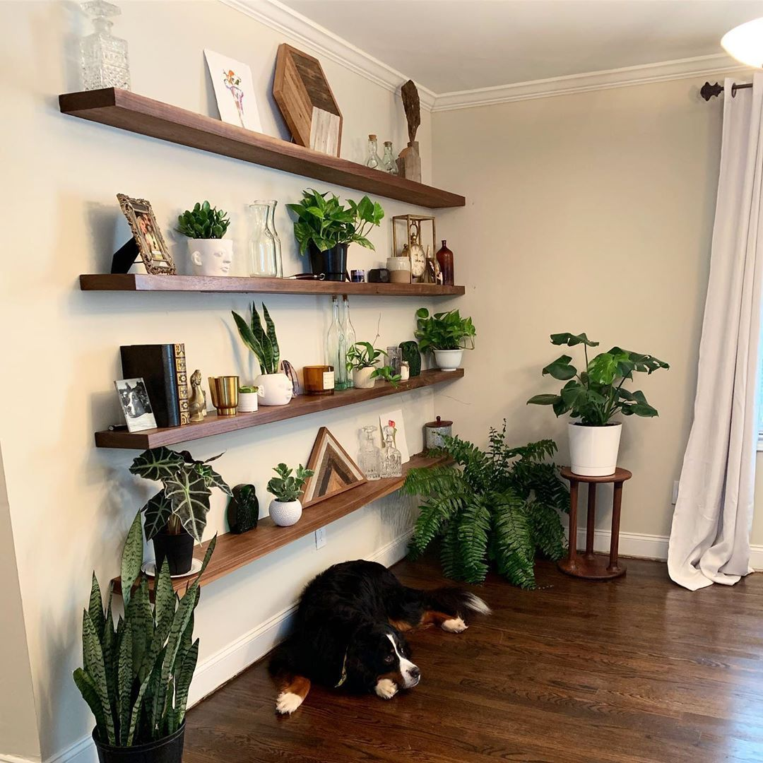 30 Indoor Plant Decor Ideas | How to Display Your