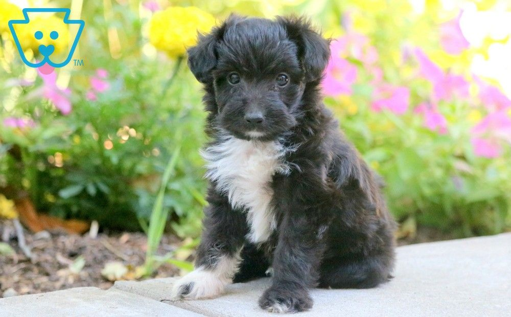 Pin On Cute Mixed Breed Puppies