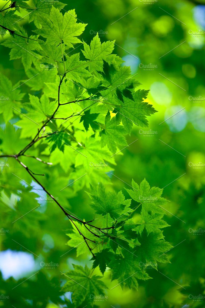 Spring Background Spring Background Green Nature Background