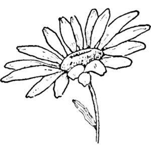 Pin By Rita Spess On Draw Flowers Daisy Drawing Flower Drawing Tutorials Flower Drawing