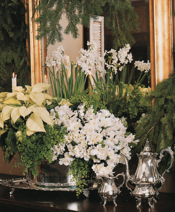 Elegant Southern Christmas: Winter's Little Known Myth + Exquisite Christmas