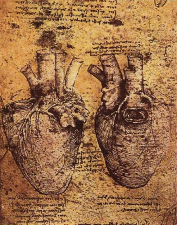 Leonardo da Vinci, Heart and its Blood Vessels, date unknown