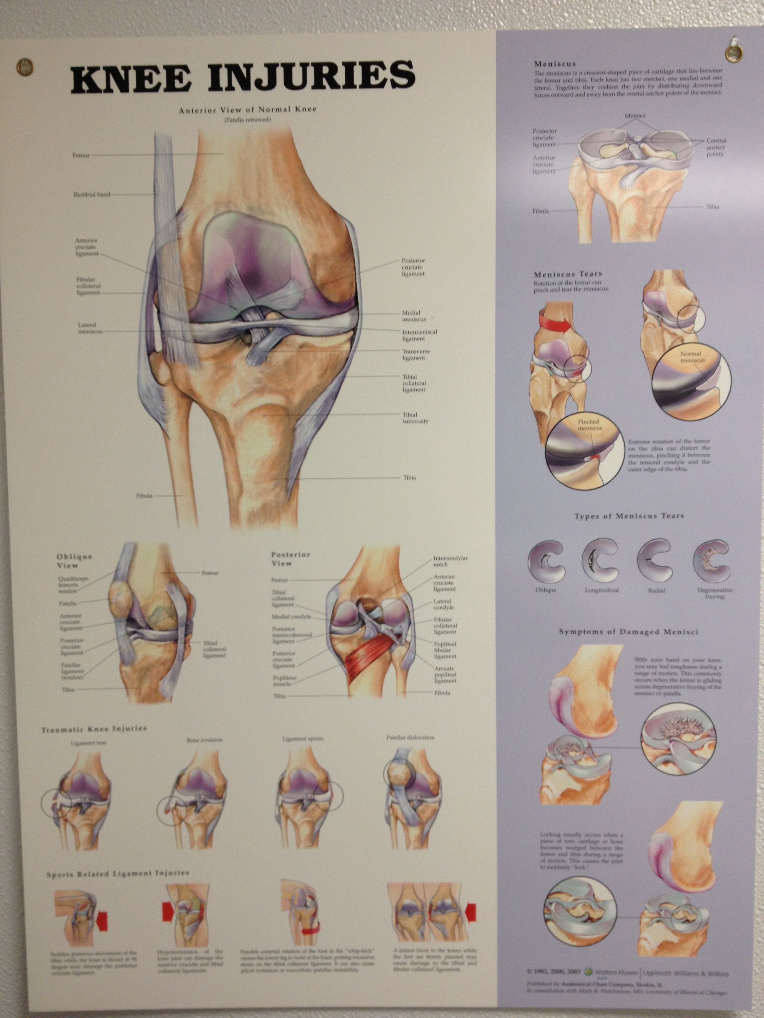 Knee anatomy | athletic training!!!!!!! | Pinterest | Anatomy ...