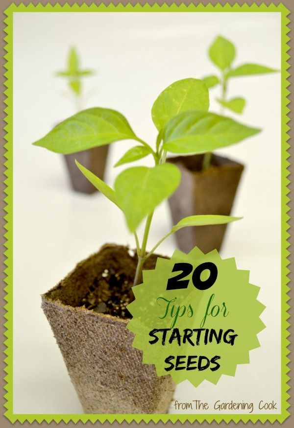 These 20 seed starting tips will give you a head start on your garden in early spring.  thegardeningcook.com