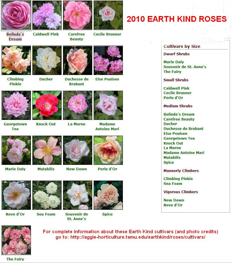 Selected Plant Cultivar Reference Lists Growing Flowers Gardening Blog Small Shrubs