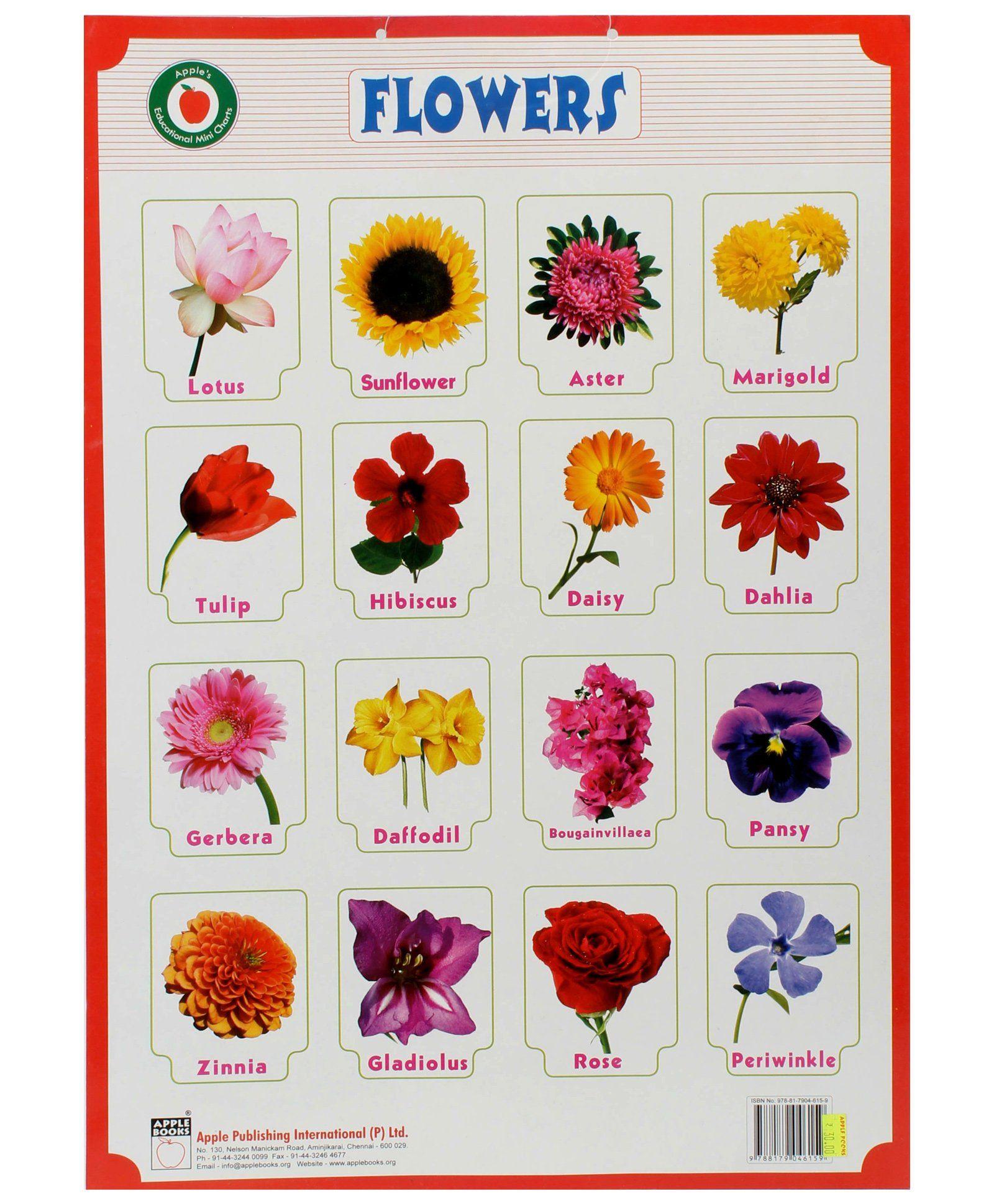 рустамом перечень цветов с картинками ниже