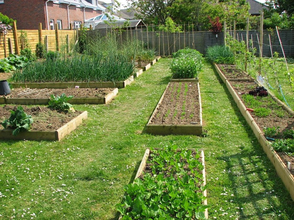 for backyard garden plans: image of perfect backyard vegetable garden design - For Backyard Garden Plans: Image Of Perfect Backyard Vegetable