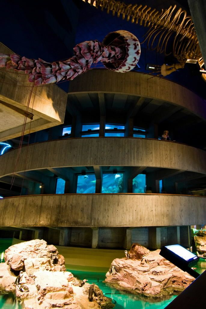 New England Aquarium, Boston, MA. | Boston, MA. | New ...
