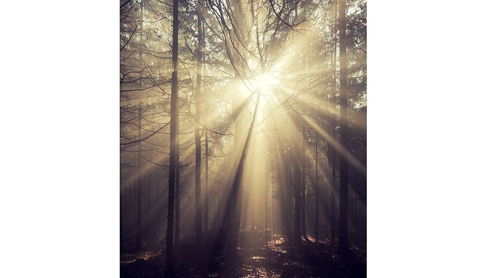 Forest Trails - Kilian Schönberger Photography