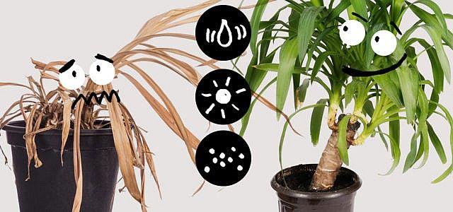 Wie man seine Pflanzen nicht tötet: 10 praktische Tipps