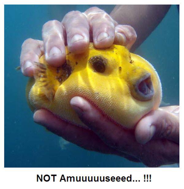 魚 ブサイク 深海