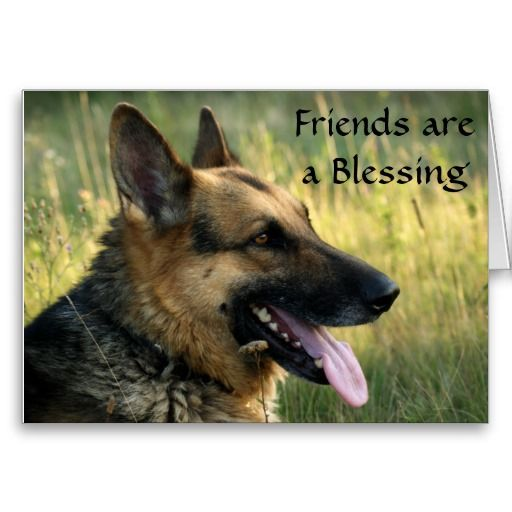 Friends are a blessing german shepherd dog card httpzazzle friends are a blessing german shepherd dog card httpzazzle m4hsunfo