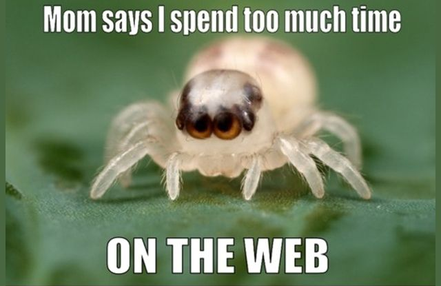 Meme Machine 5 Hilarious Viral Topics Trending Right Now Jumping Spider Deadly Animals Spider