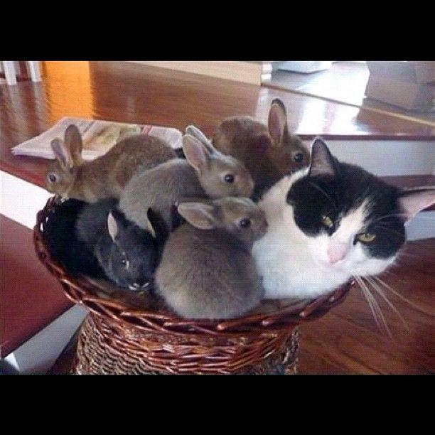 Basket full of love ) Belinda Chang Chang Fox