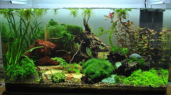 kundenaquarien aquascaping shop f r naturaquarien. Black Bedroom Furniture Sets. Home Design Ideas