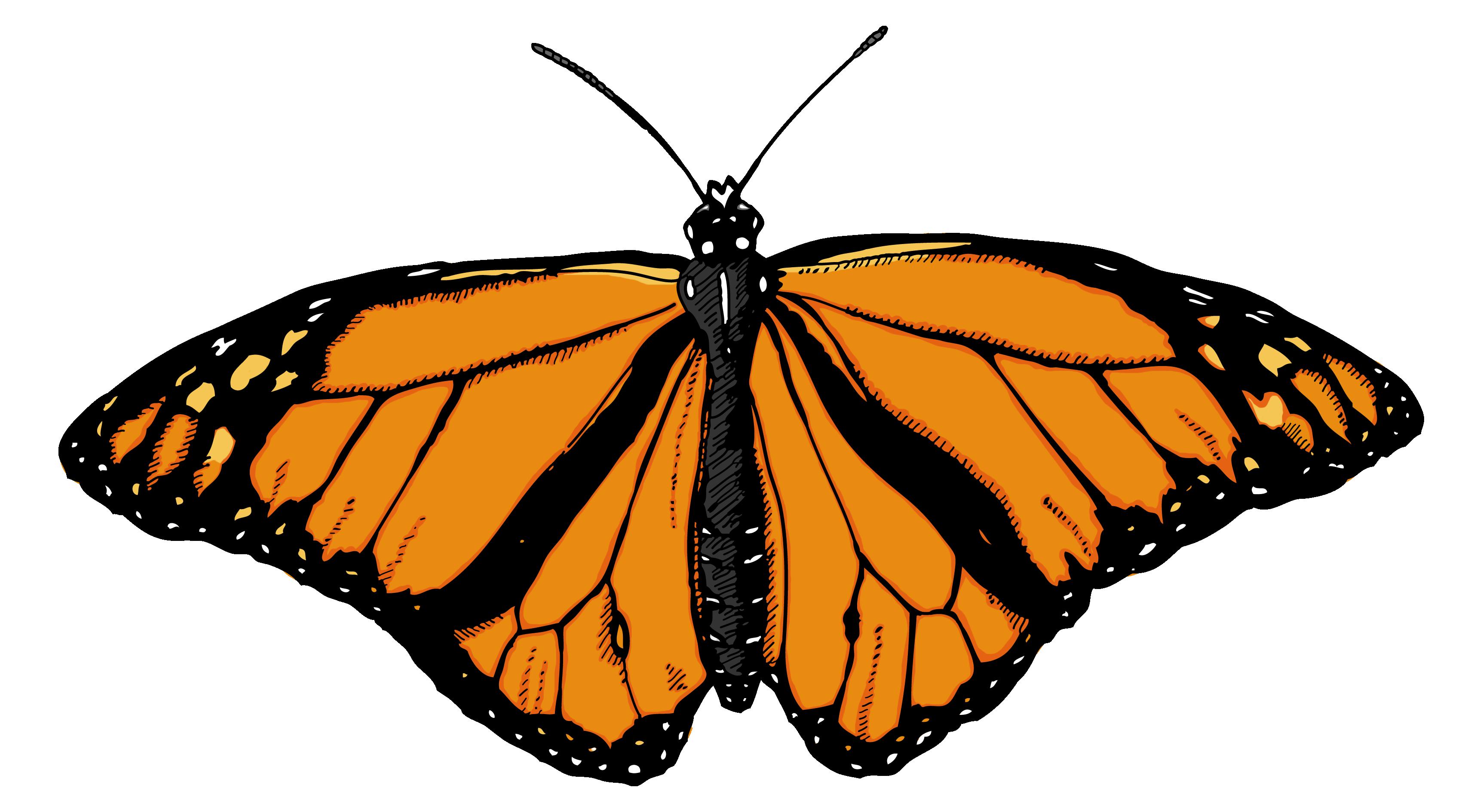 Butterfly Illustration Google Search Buy Art Print Butterfly Illustration Png Images