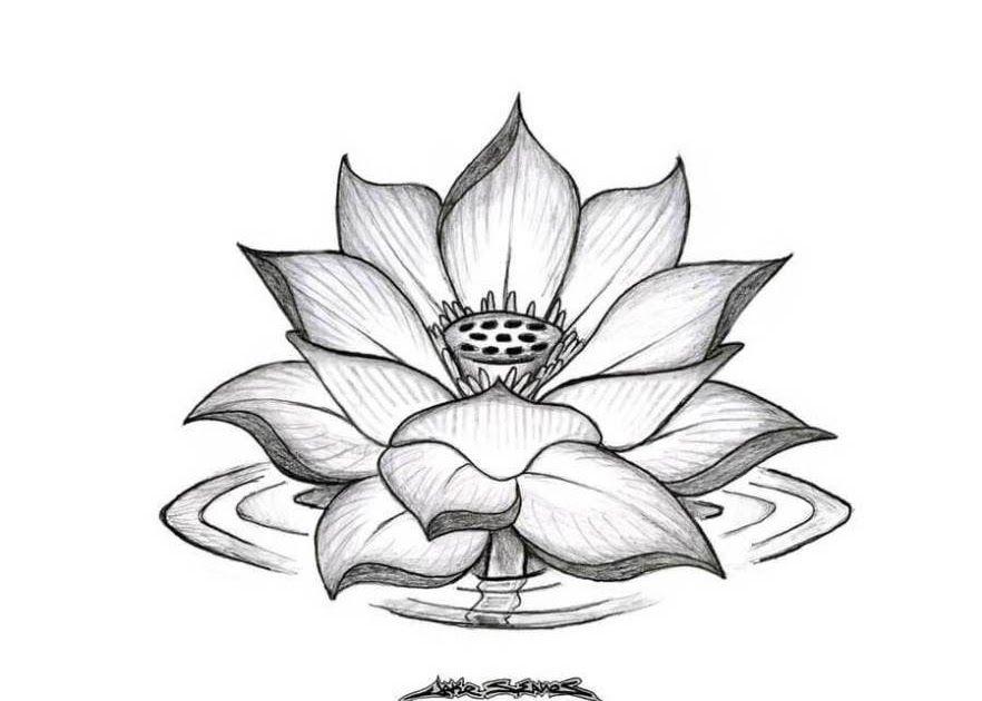 Gambar Bunga Mawar Pakai Pensil 15 Gambar Sketsa Bunga Dari Pensil Yang Mudah Dibuat 92 Gambar Ga Flower Sketches Lotus Flower Drawing Flower Drawing Tumblr