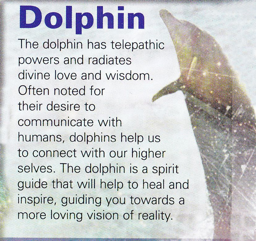 Dolphin symbolism & dolphin meaning | dolphin signs, symbols & totems.