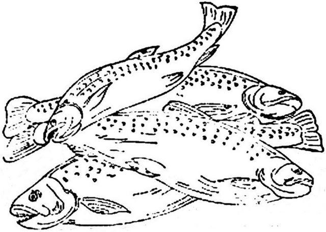 1886 Ingalls Pile of Dead Fish