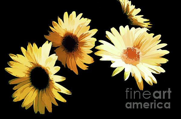 The beautiful abstract Gerber Daisies sure stand out against the black background!!