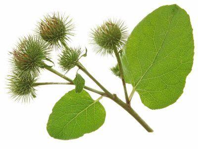 Benefits of Essiac Tea in Cancer Treatment #news #alternativenews