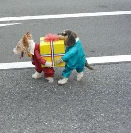 The Best Dog S Fancy Dress Costume Ever Pet Costumes Dog