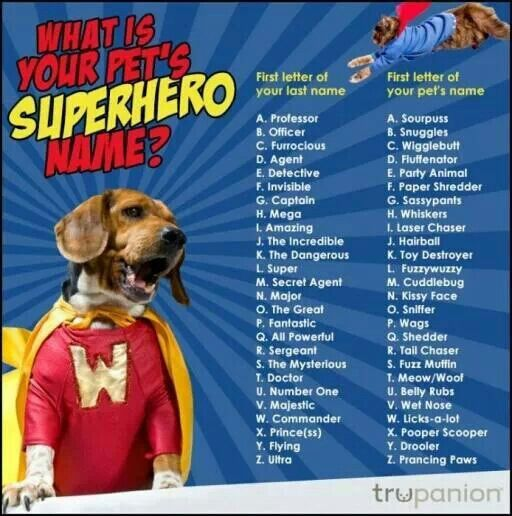 Funniest dog names
