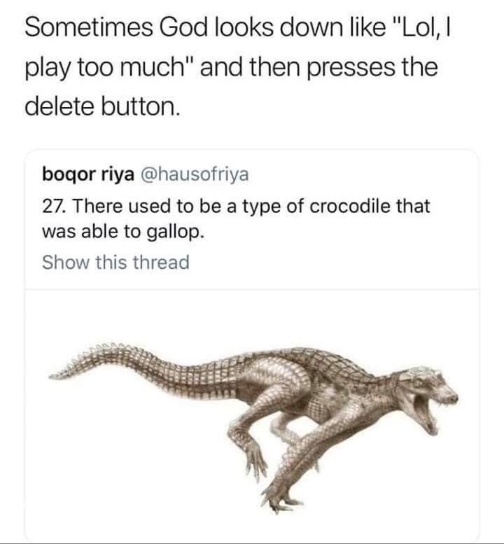 Stolen Meme Dump - Curated For Your Pleasure
