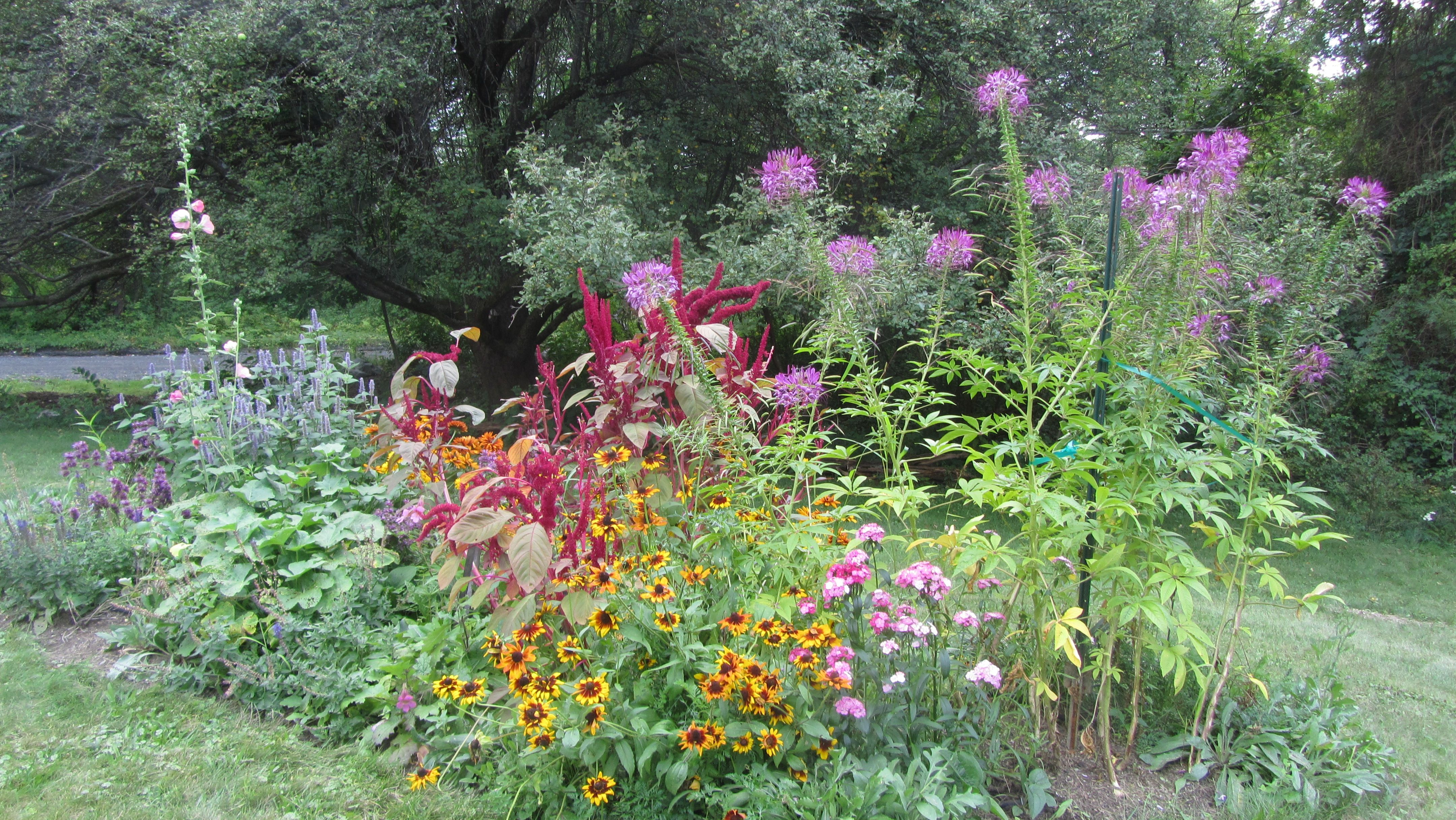 Flowerbed A July 2015