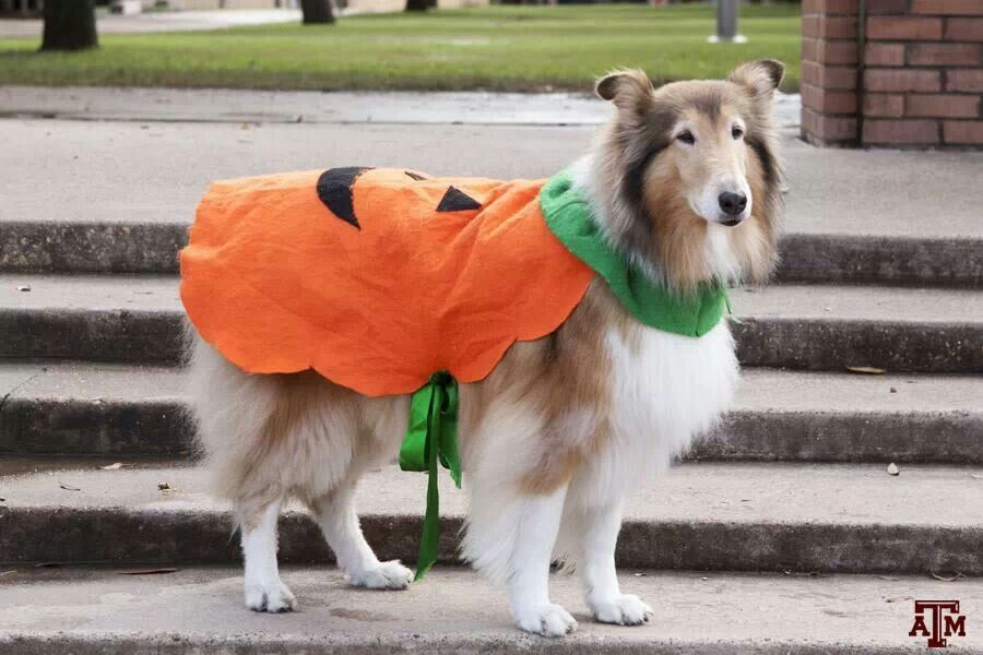 Miss Rev dressed as a pumpkin for Halloween, 2013!
