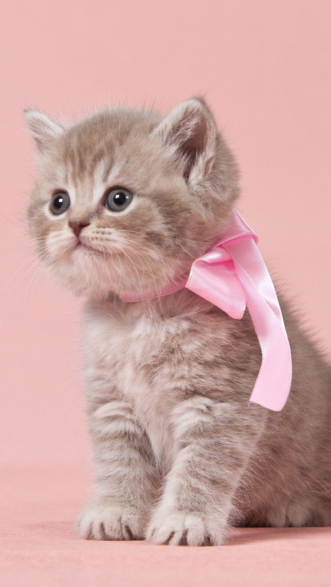 Pin By Nata Gulieva On Oboi Fony Risunki Dlya Telefona In 2020 Cats Cute Cats And Kittens Kittens