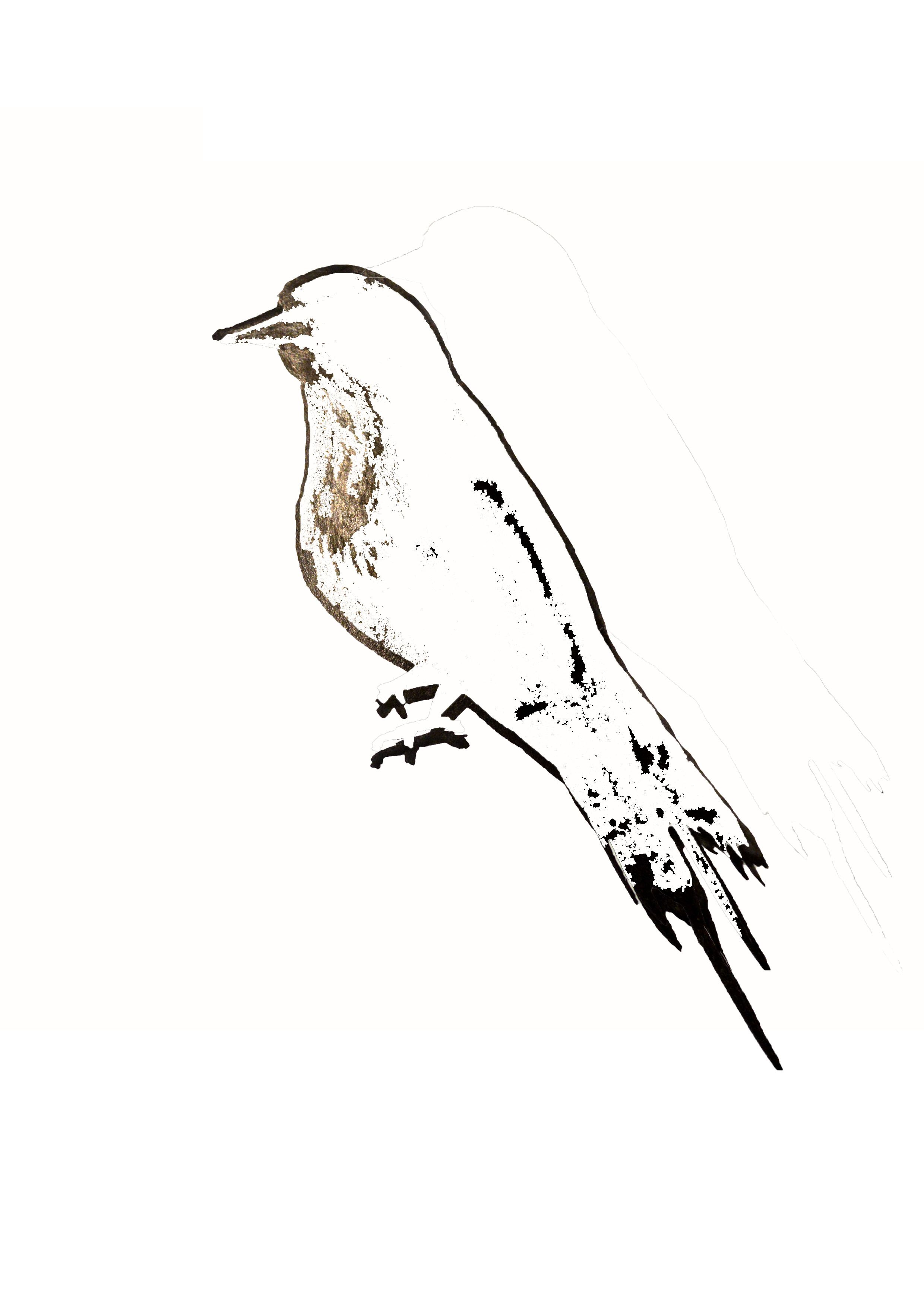 The Mockingbird. The addition of the bird to my illustrations will be to symbolise the hiding meaning in the title, in that this type of creature does no wrong, it simply mimics the actions of another.