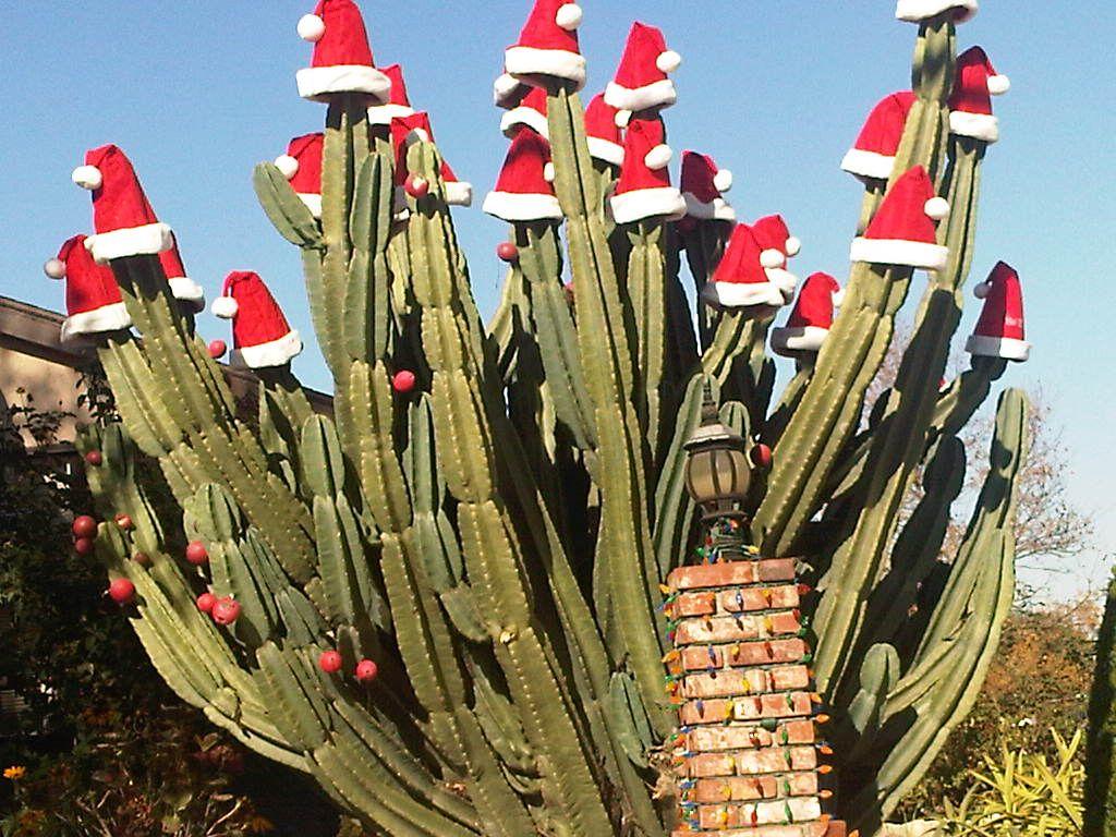 santa hat cactus - Decorating Cactus For Christmas