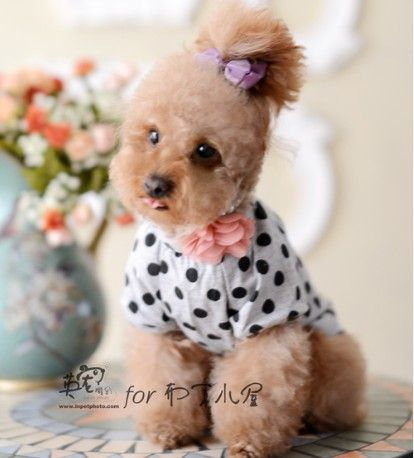 Toy Poodle Lace Cheap Dog Clothes With Free Shipping Spring And