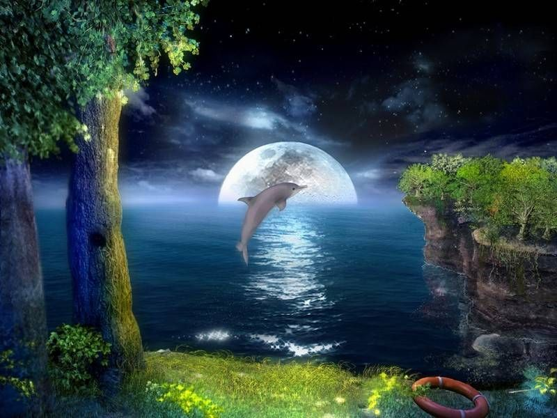 Free moving dolphin screensavers what 39 s your favorite - Surreal screensavers ...