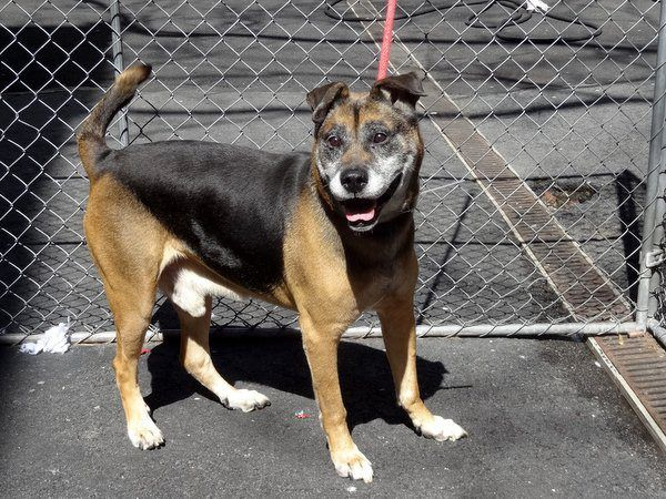 Safe 4 19 13 Manhattan Center Squishy A0961987 A Male Black And