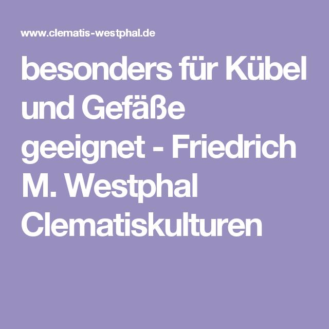 besonders für Kübel und Gefäße geeignet - Friedrich M. Westphal Clematiskulturen
