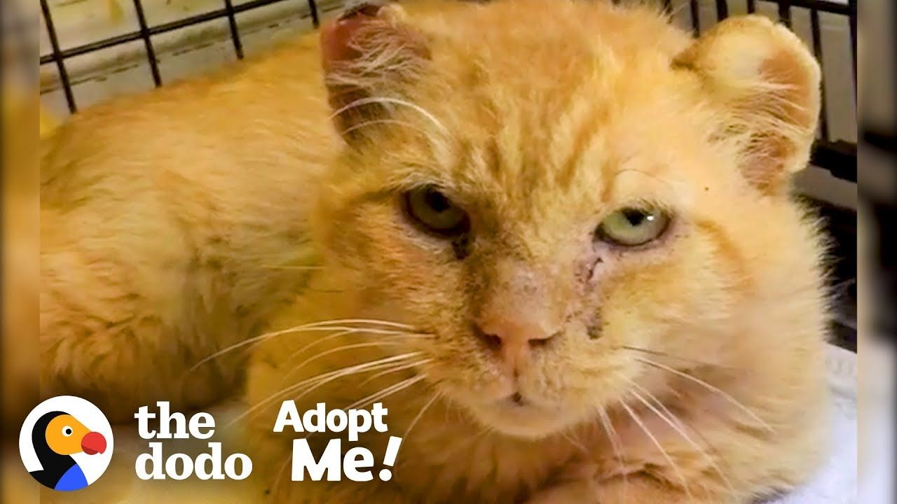 Feral Cat Goes From Hissing To Purring The Dodo Adopt Me Youtube Feral Cats Cats Purring
