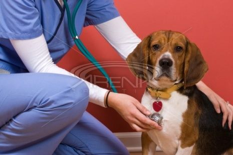 Cute Beagle Baby Dog Dog Treatment