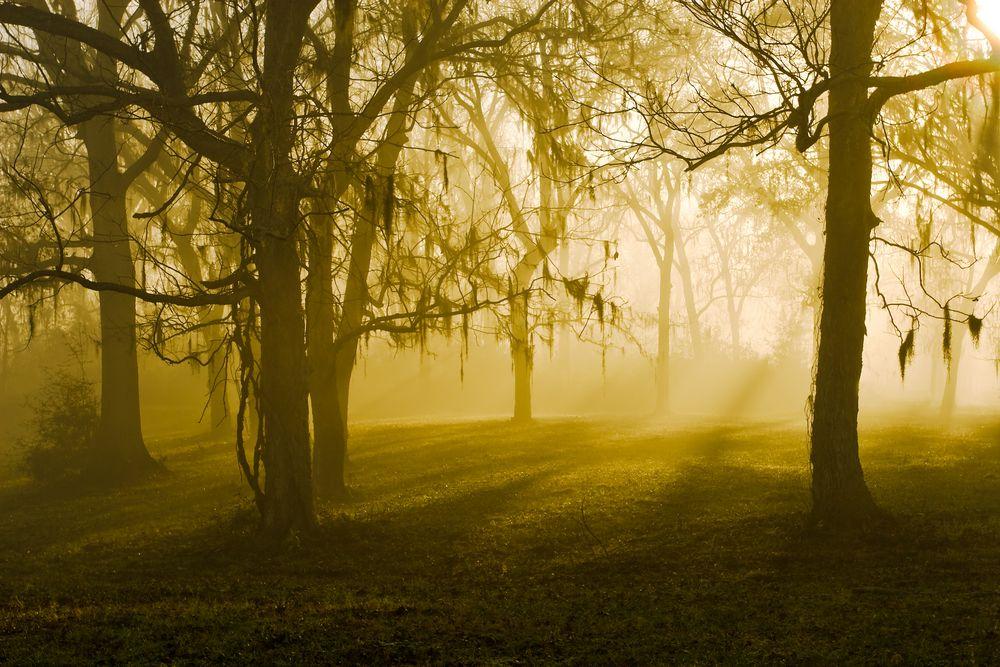 Brazos Bend State Park, perderse en este paisaje y no dudar ni u segundo en hacerlo, eso es una gran aventura para conocer cada rincón de Houston. http://www.bestday.com.mx/Houston-area-Texas/Atracciones/