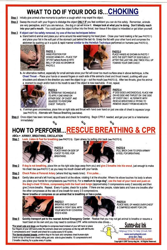 Dogs Stuff Check Out These Wonder Tips About Dogs In The Article Below Check This Useful Article By Going To The Link At Cpr For Dogs Dog Safety Dog Care