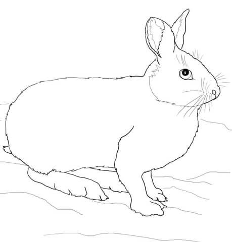 Snowshoe Hare Or Rabbit Coloring Page From Hares Category Select