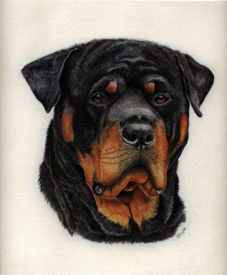Gayle Mason Colored Pencil Pet Portraiture Dog Art Dog Portraits