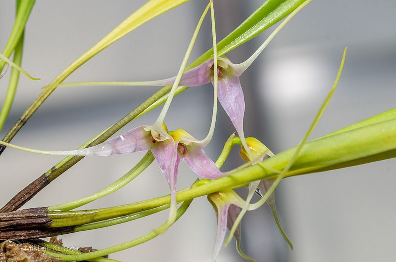 Pin by Etienne Pochon on Orchidée Sweet smell, Light