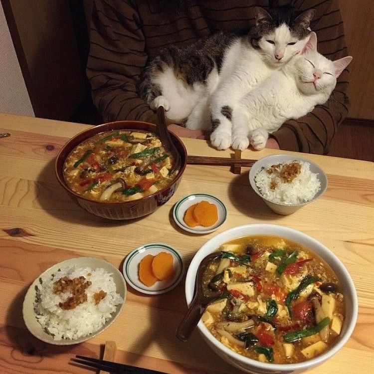 Прикольные картинки с ужином, бабушке фото открытка